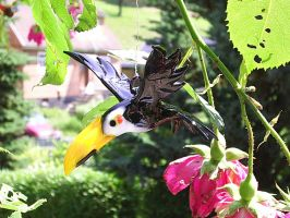 Toucan by Glasmagie