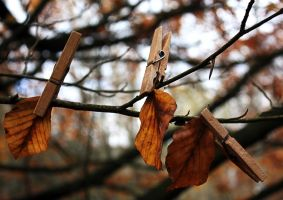 clip autumn by Blaumohn
