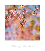 cherry blossom by arthika