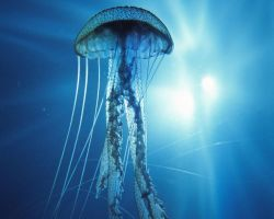 jellyfish by leapdaybride