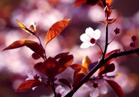 Late afternoon blossoms. by cichutko