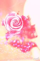 Rose contest by esa16