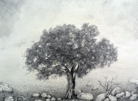 Hawthorn by aakritiarts