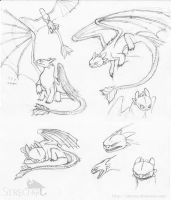Toothless sketches by Strecno