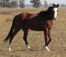Sonus Llers (Thoroughbred Flliy-2009) by Romydb