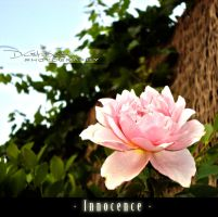 Innocence by DrGM