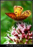 Butterfly and flower by ironman80