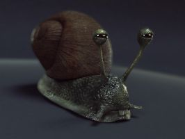 Snail One by Hankins