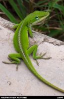 Another Lizard, whoo.... by phantompanther