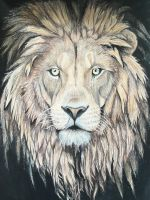 Lion, The King by Nicolewootten