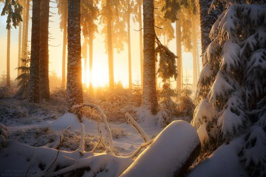Winter Wonder by FlorentCourty
