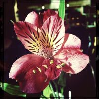 Orchidae by Chelliusbee