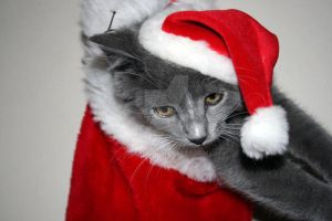 Merry Kitten Christmas by Nebey