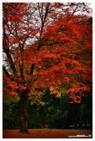 Autumn Reds by padawan71