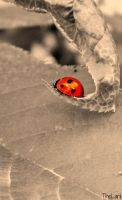 Ladybird by TheLarii