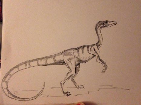 Inktober Day #14 - Procompsognathus by Ginger-Ketchup