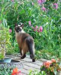 A Visitor In Our Garden by KeswickPinhead