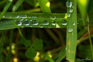 Droplets by LatchDrom