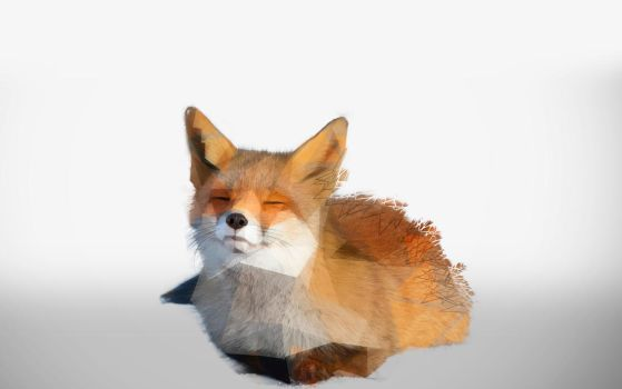 -- Low poly shattered fox -- by 0l-Fox-l0