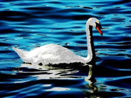 Swan by Ginger-PolitiCat