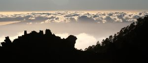 Cloud Forests of Tenerife by netzephyr