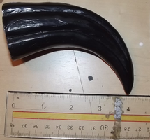Large raptor claw by Monoyasha
