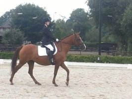 Dressage Competition Stock by Locomatic