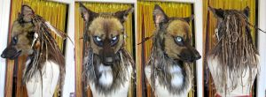 Greba Sombreautomne head turnaround by Faol-bigbadwolf