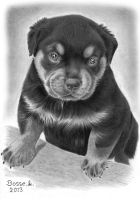 Rottweiler Puppy 2 by Torsk1