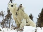 family of bears by isidre