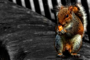 Squirrel Close Up by Kem2000