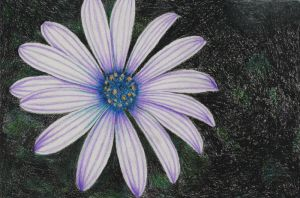 Purple Daisy by Sofera