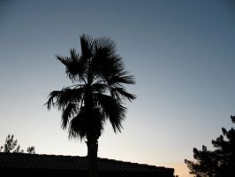 Palm tree silhouette by Sonic840