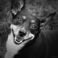 Happiest Dog Ever by Syrjusz