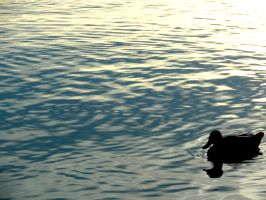 lonely duck :D by IolanthePhoto