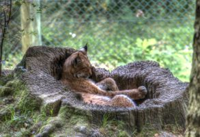 HDR animal by Louis-photos
