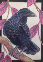ACEO: Resting Iridescent by DanielleMWilliams