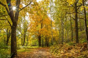 Autumn in the forest by attomanen