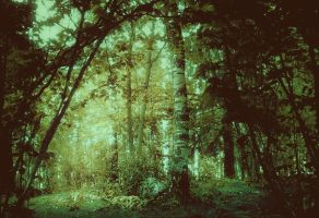 forest 31 by Amalus