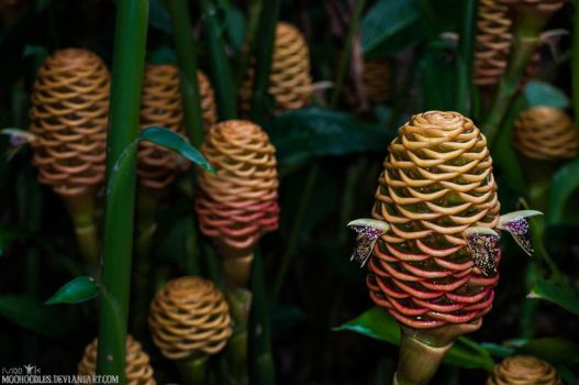 Beehive Ginger by Moohoodles