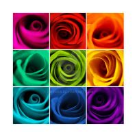 Rainbow Rose II by Finvara