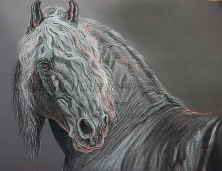 Friesian Stallion - Charcoal,pastel,conte drawing by amequinedesign