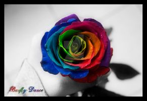Rainbow Rose by BarflyDance