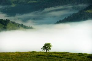 Solitary trees, if they grow at all, grow strong by Magda27
