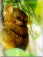 NOCTURNAL PRIMATE by aiyiee