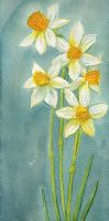 Narcissi by Sandra-777