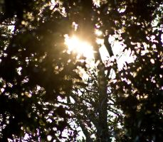 Tree and sunshine by drewii57