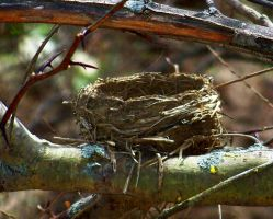 Empty Nest by MadGardens