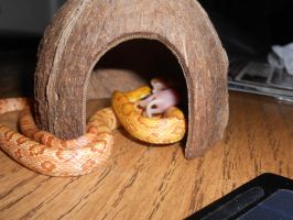 Dio eating 1 by Rapt3rX