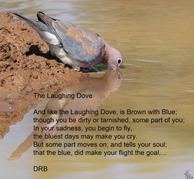 The Laughing Dove by Automutt